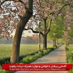 آشنایی بیشتر با خواص و موارد مصرف درخت پالونیا