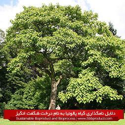 دلایل نامگذاری گیاه پالونیا به نام درخت شگفت انگیز